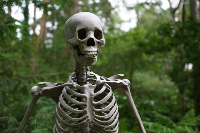 医学部の解剖学について解説する【前半戦最大の試練】